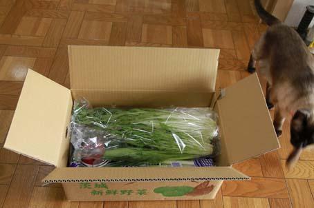 野菜BOXa